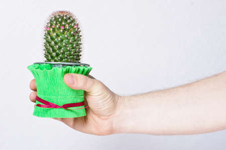 Male hand holding cactus in the flowerpot photo