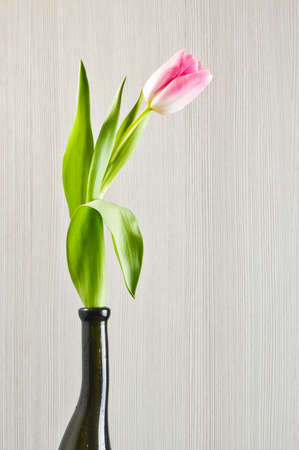 matherday: Pink tulip in the black glass vase