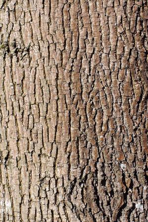 Brown tree bark texture in portrait orientation photo