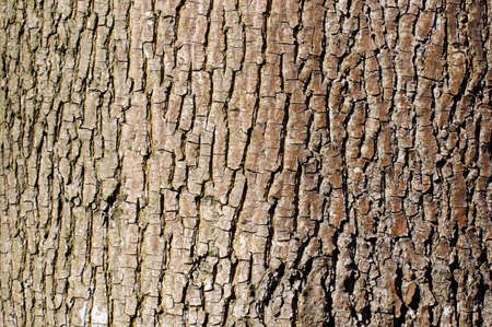 Brown tree bark texture in landscape orientation photo