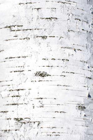 Birch bark texture abstract in portrait orientation