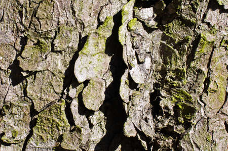 Tree bark surface texture abstract photo