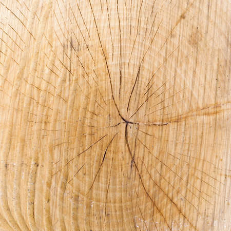 Wood texture with growth rings photo
