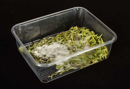 Molded vegetables in the plastic container photo