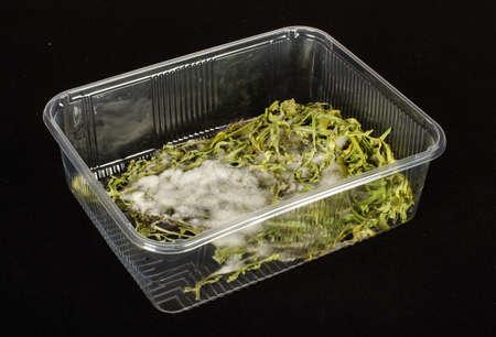 Verduras moldeados en el recipiente de pl�stico photo