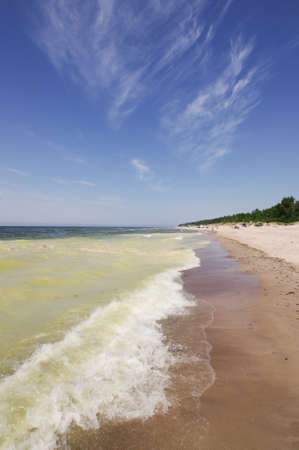 Environmental problem green sea photo