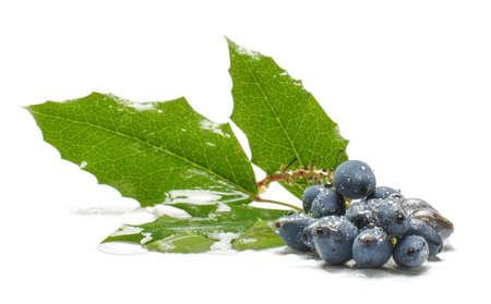 Poisonous blue berries isolated on the white photo