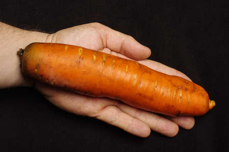 genetically modified organism: Genetically modified organism GMO concept : giant carrot on the human palm Stock Photo