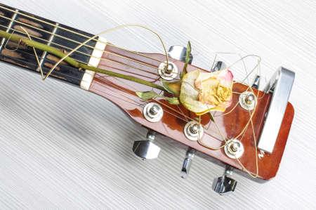 A hervadt rózsa akusztikus gitár feje Stock fotó