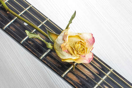 fret: Wilted flower on guitar fret Stock Photo