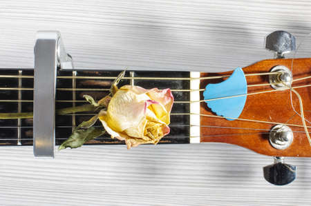 clamped: Dried rose flower clamped on acoustic guitar