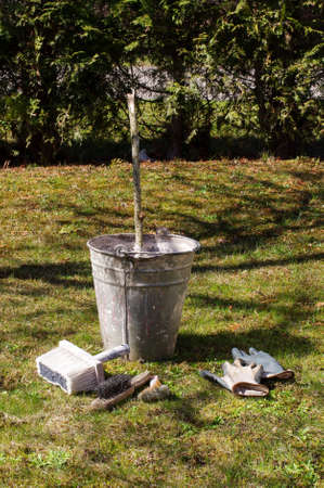 whitewash: Limewash or whitewash equipment for early spring gardening Stock Photo
