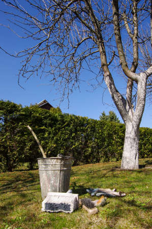 blanch: Apple tree garden whitening process and equipment Stock Photo