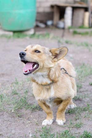 watchdog: Angry watchdog