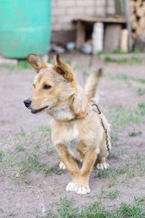 watchdog: Alert watchdog