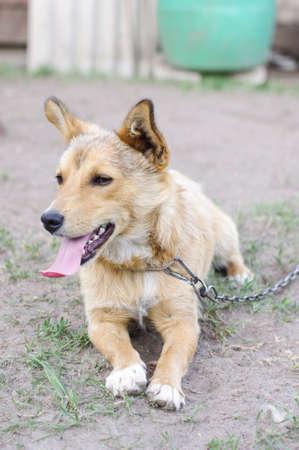 watchdog: Watchdog lying on the ground
