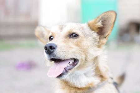 foxy: Happy foxy dog close up focus on eyes