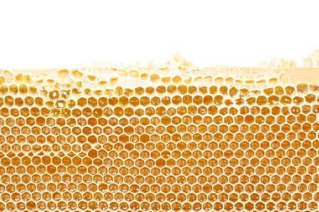 Honeycomb in the wood frame close up with copyspace