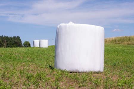 Hay harvest rolls packed in the white plastic covers Stock Photo