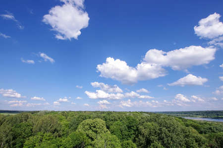 treetops: Beautiful cloudy sky over forest treetops