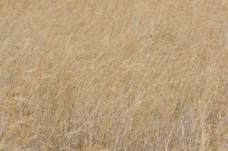 wisps: Wisps meadow abstract pattern