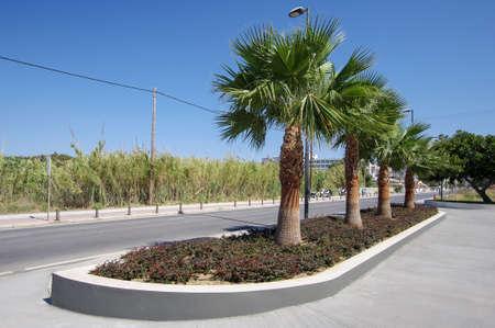 kos: Palms in the street of Kos town, Kos, Greece