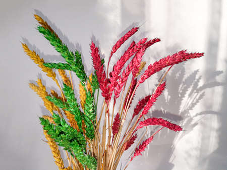 Bunch of ear of ryes painted yellow, green and red colors as a flag colors of Lithuania 版權商用圖片
