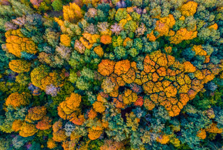Aerial view of plenty of different trees and autumn colors in the forest Stock fotó