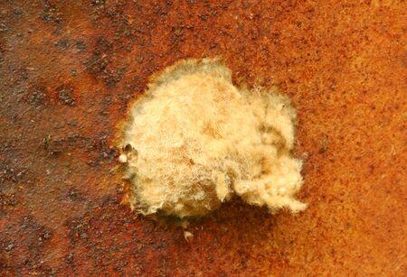 sac: Deck Spider Egg Sac. Stock Photo