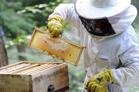 alveolos: apicultor