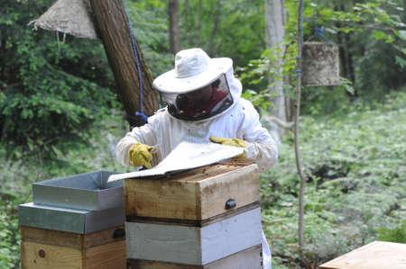 beekeeper: beekeeper