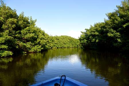 mangrovemoeras