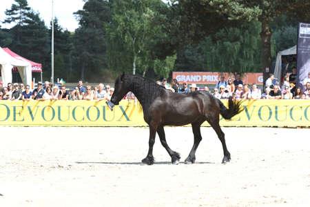 execute: Santi serra horse dressage show