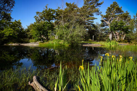 landscape of fontainebleau forest