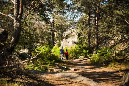 landscape of fontainebleau forest Banque d'images - 147554290
