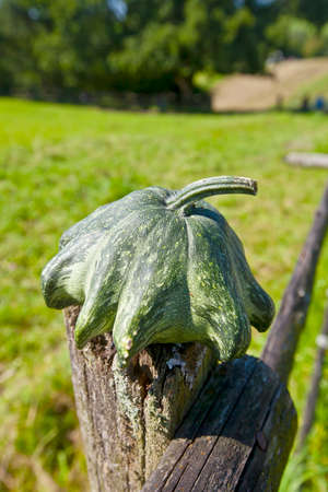pasture fence: Harvest time pumpkin as pasture fence post jewelry I