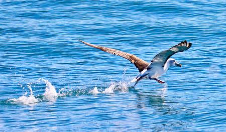 albatross: albatross in kaikoura