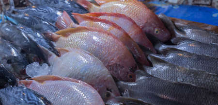 cypriniformes: fish in the market in thailand Stock Photo