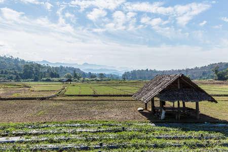 het rijstveld in Thailand