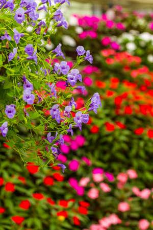 the flower park