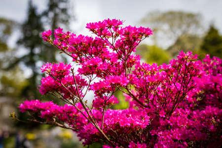 pink flower in public park ireland