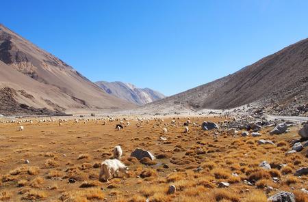 Pasture in North India photo