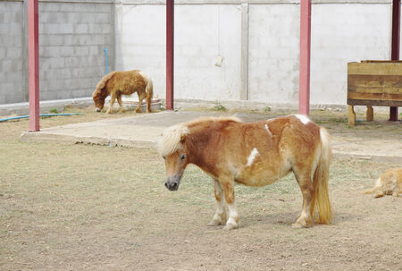 Brown little pony in the farm