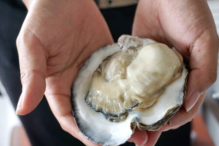 icecube: close up of the Fresh oyster with shell and ice cube on human hands Stock Photo