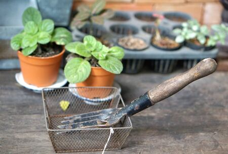 plant pot: garden tools in the wire basket on the rustic timber table with plant pot background