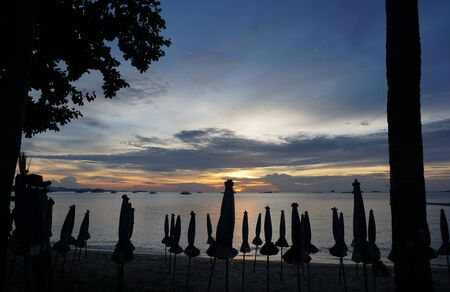 umbella: silhouette of the  tree and parasol at Pattaya beach with beautiful sunset background