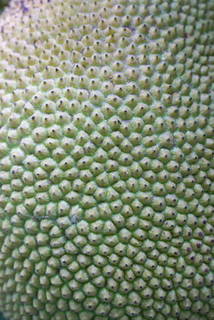 knotting: Closed up detail of the Jackfruits skin texture Stock Photo