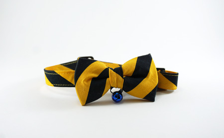 garniture: Yellow and black stripe dog bow tie with blue small bell on white background