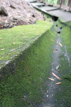 waterspout: Green moss cover Drainage concrete pipe Archivio Fotografico