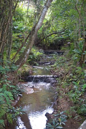 watercourse: watercourse in the rainforest in northern part of Thailand Stock Photo
